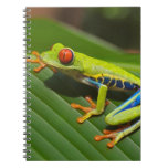 Tree Frog Spiral Notebooks