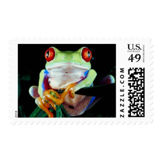 Tree Frog stamps
