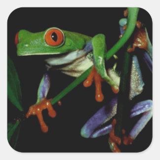 Tree Frog Sticker 2