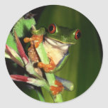 Tree Frog stickers