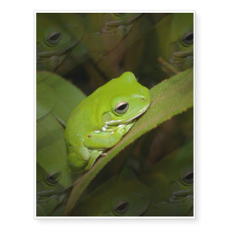 Tree Frog Temporary Tattoos