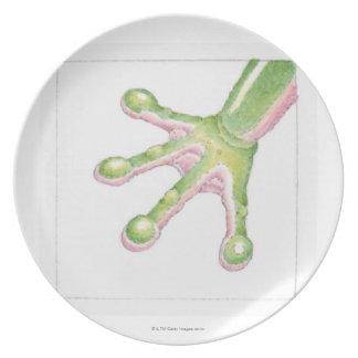 Tree Frog Toes Dinner Plate
