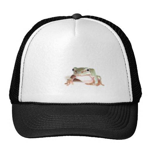 tree frog trucker hat