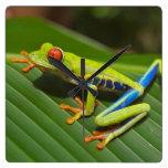 Tree Frog Wallclocks