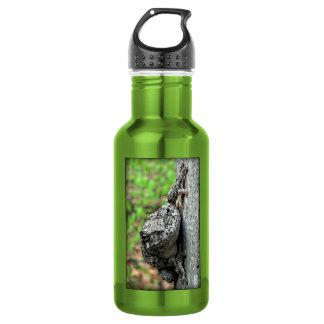 Tree Frog Water Bottle