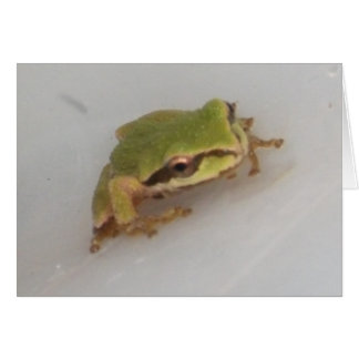 Tree Frogs Card