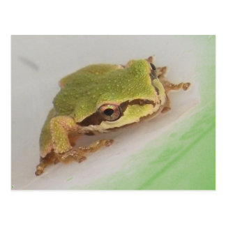 Tree Frogs Post Card