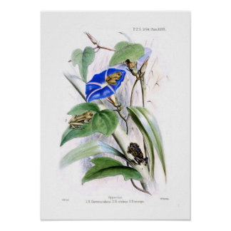 Tree frogs posters