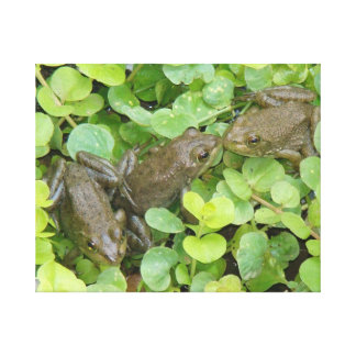 Tree Frogs Water Garden Wildlife Animals Canvas