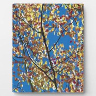 Tree from RedWood Coast America Plaque