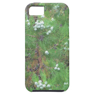 tree fruit iPhone SE/5/5s case