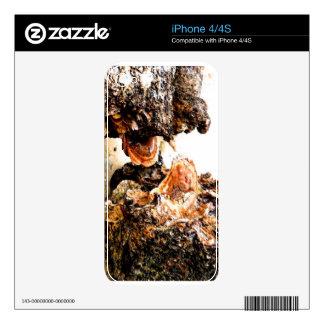 tree fungi iPhone 4 decals