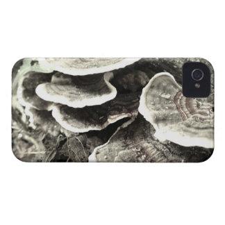 Tree Fungus Blackberry Case
