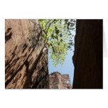 Tree Growing Between Rocks at Zion National Park Card