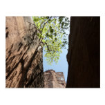 Tree Growing Between Rocks at Zion National Park Postcard