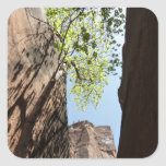 Tree Growing Between Rocks at Zion National Park Square Sticker