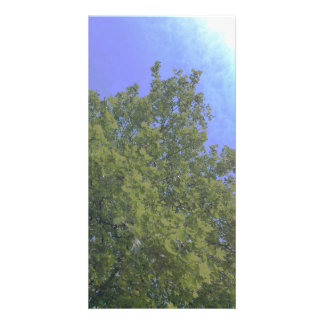 Tree growing to light card