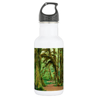 Tree Hall Of Mosses Olympic National Stainless Steel Water Bottle