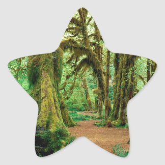 Tree Hall Of Mosses Olympic National Star Sticker