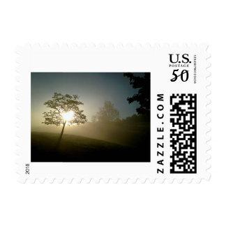 Tree heart at sunrise postage
