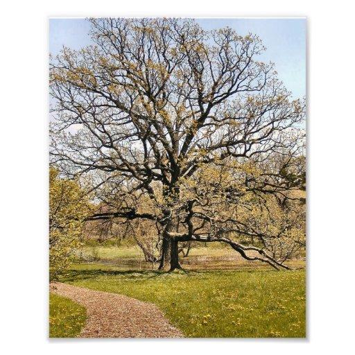 Tree I Digital Photo Of Arboretum Tree