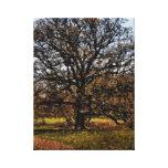 Tree I Photo Of Arboretum Tree Digitized Painting Canvas Print
