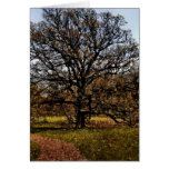 Tree I Photo Of Arboretum Tree Digitized Painting Card