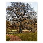Tree I Photo Of Arboretum Tree Digitized Pixels