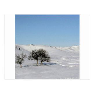Tree Icey Snowscape Postcard
