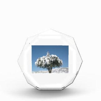 Tree Image Acrylic Award
