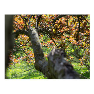Tree in Autumn Photography Postcard