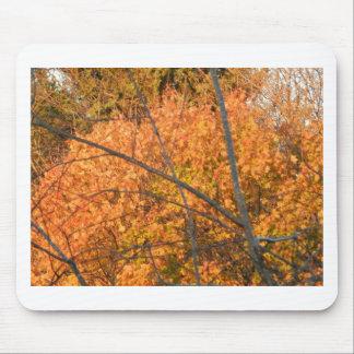 Tree in Autumn Regalia Mousepads