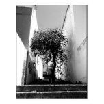 """Tree In Cape Town"" JTG Art Postcard"