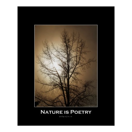 TREE IN FOG Photo Poster