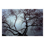 Tree In Fog Posters