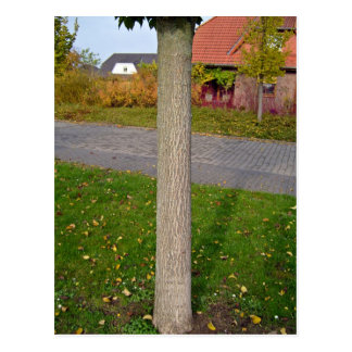 Tree in Garden Postcard
