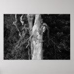 Tree in Goose Prairie Print
