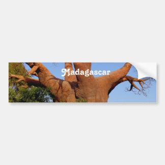 Tree in Madagascar Bumper Sticker