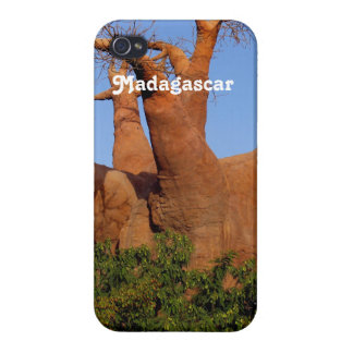 Tree in Madagascar iPhone 4 Covers
