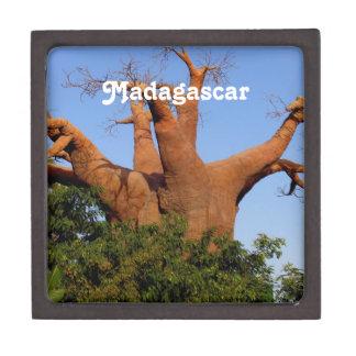 Tree in Madagascar Premium Keepsake Box