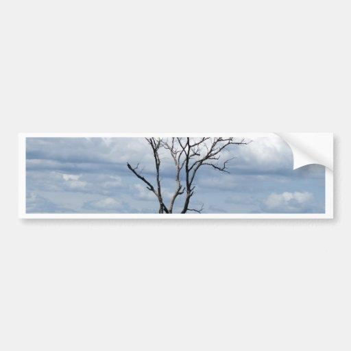 Tree in motion bumper sticker