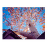 Tree in Sedona Postcard