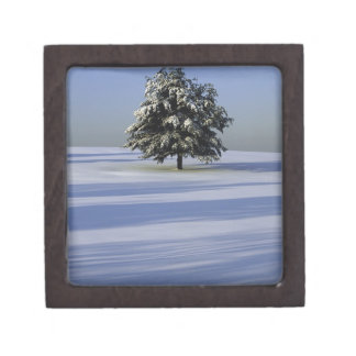 Tree in snow covered landscape jewelry box