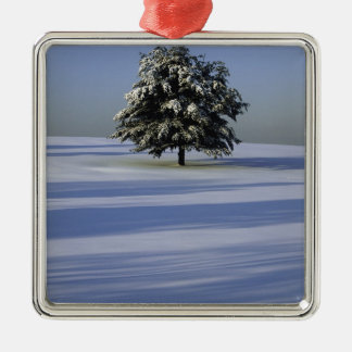 Tree in snow covered landscape ornament