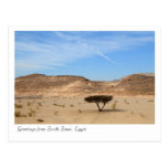 Tree in the desert, South Sinai, Egypt Postcards
