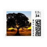 Tree in the Morning Stamp