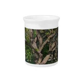 Tree in the springtime drink pitcher