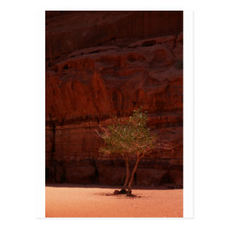 Tree in Wadi Rum Desert Postcard