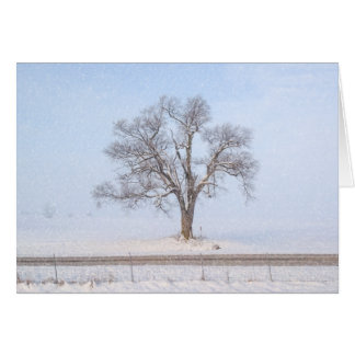 Tree in Winter Blizzard Farmersville Illinois USA Card
