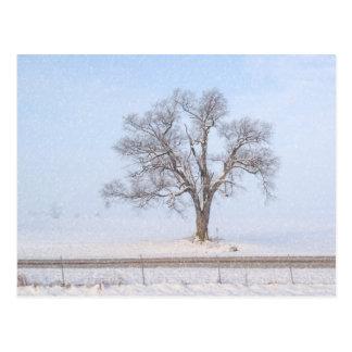 Tree in Winter Blizzard Farmersville Illinois USA Postcard